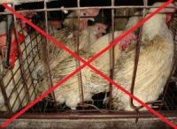 Bhutan bans cruel cages for domesticated birds