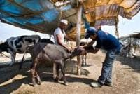 More support for disaster struck animals in Maharashtra